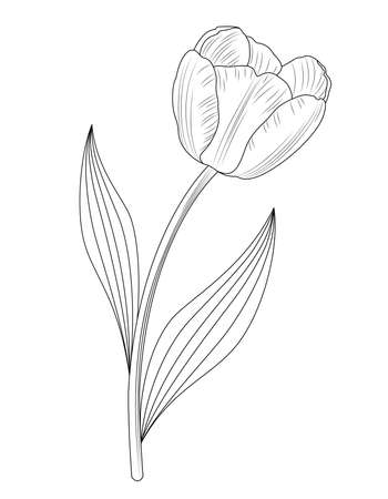 Tulip icon design. Doodle style. Design, print, decor, textile, paper. Vector illustration. Ilustração