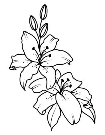 Bouquet of blooming lilies. vector illustration. Black and white drawing for the design of presentations, invitations, wedding decor.