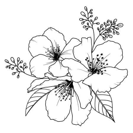 Cherry blossom outline. Hand draw sakura bouquet. Vector illustration. Illustration