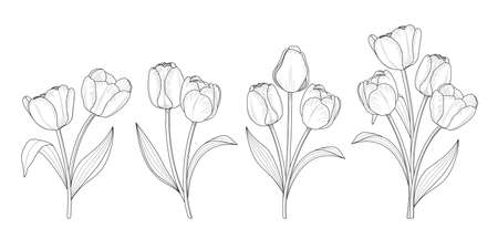 Tulip flower graphic outline style. Vector illustration.