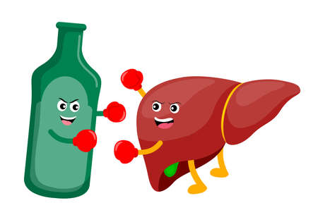 Human liver cartoon character fighing with alcohol drink. Alcohol related liver disease. Vector illustration