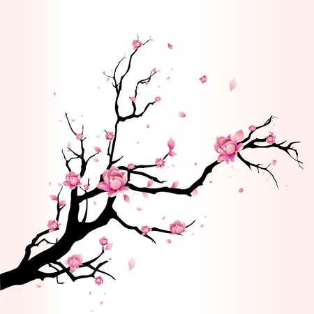 fleur cerisier: Fleur de cerisier