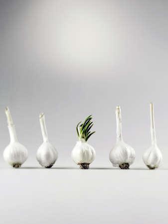 offshoot: Garlic