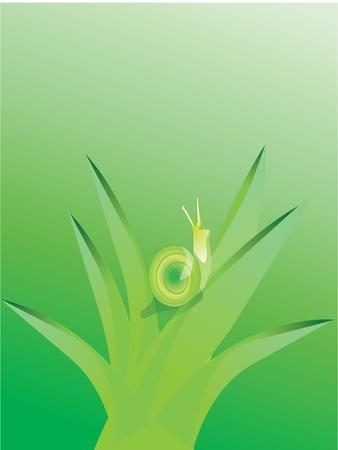 slow food: Lumaca in alow e ambiente verde