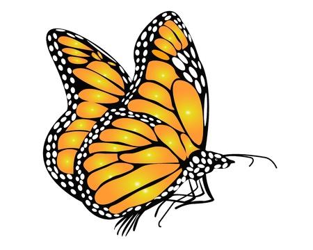 Papillon Monarque Banque d'images - 10703881
