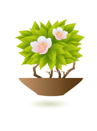 meditation isolated white: Pink flowers with pot