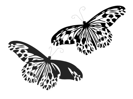black and white backgrounds: Butterflies with black spots