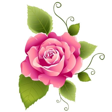 vintage: Różowa róża konstrukcji wektora Ilustracja