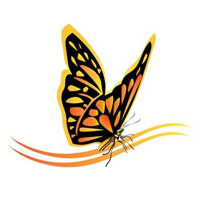 mariposa: Mariposa Monarca