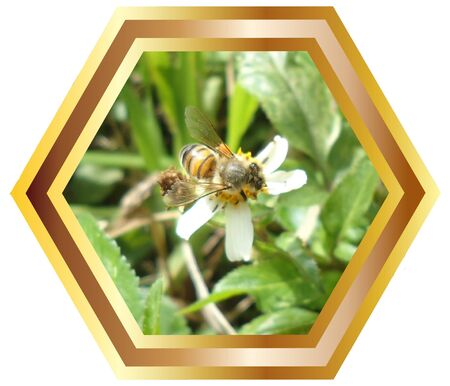 gold en:  Bee with honey nest background picture