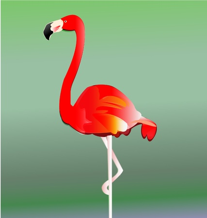 Flamingo bird vector eps10 Vector
