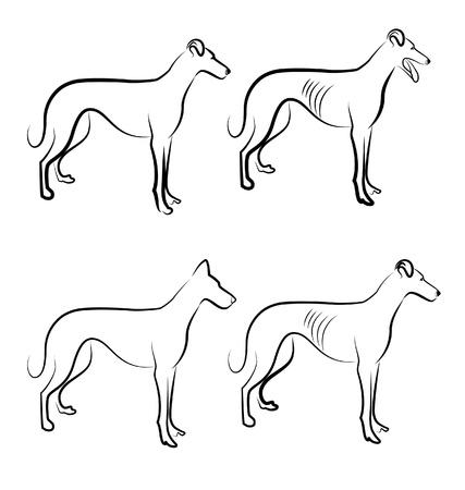 stock breeding: Greyhound dogs logo vector
