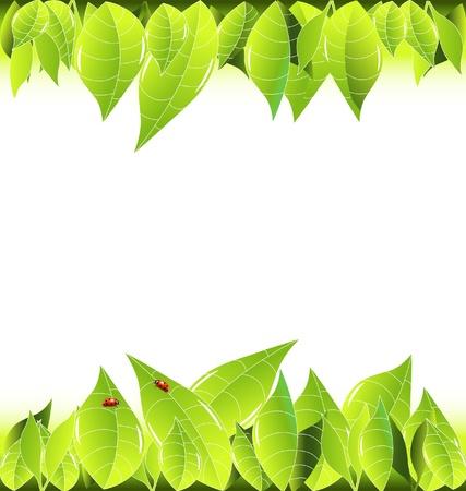 cute border: Lasciare e coccinelle cornice di sfondo