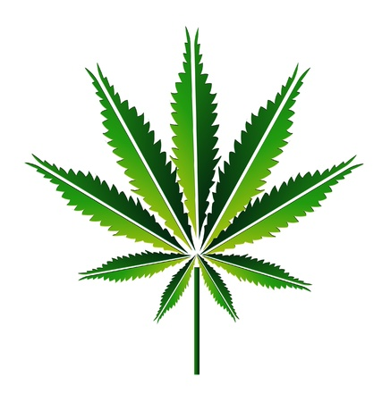 cannabis leaf: Green hemp leaf or cannabis leaf illustration