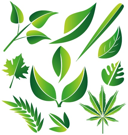 walnut: Set of green stylized leafs illustration