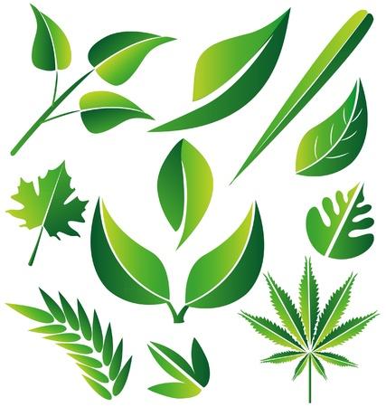 Set van groene gestileerde bladeren illustratie