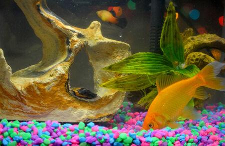 fish tank: Tank fish pets background