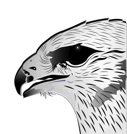 prey: Eagle Head