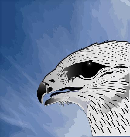 Eagle and blue sky vector Vector