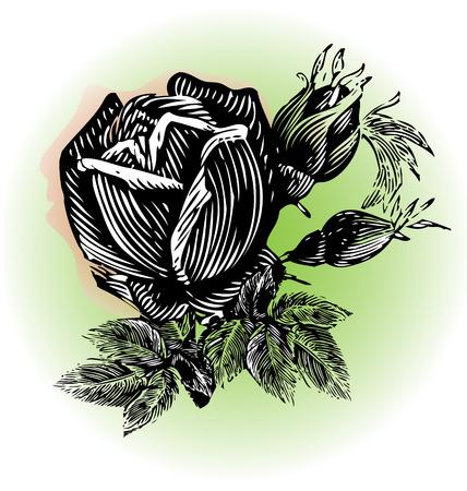 Roses vintage grunge design  Vector