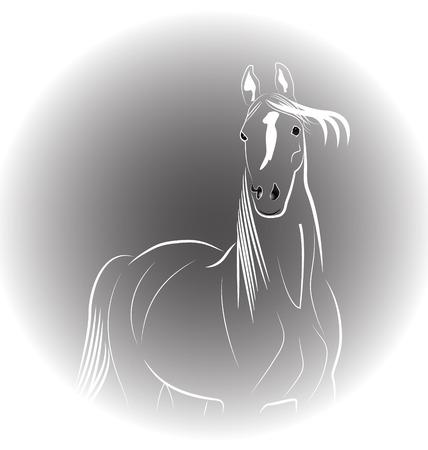 Horse portrait icon vector