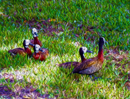 Ducks on grass oil painting background photo
