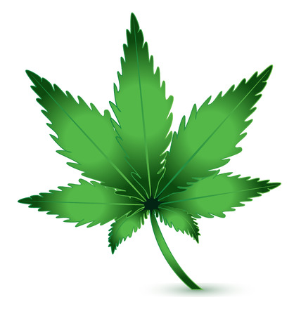 cannabis: Cannabis Marijuana plant icon logo vector Illustration