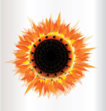 Autumn sunflower harvest season Vector