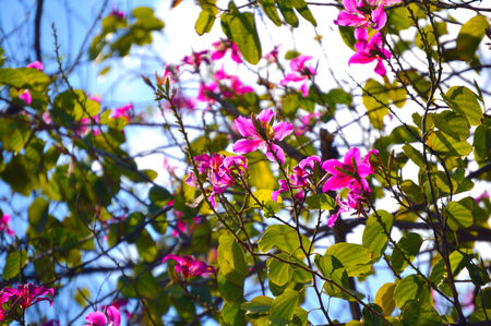 Pink flowers blossom tree background photo