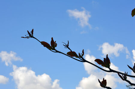 Branch of tree with blue cloudy sky background picture photo