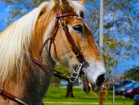 Horse head portrait photo