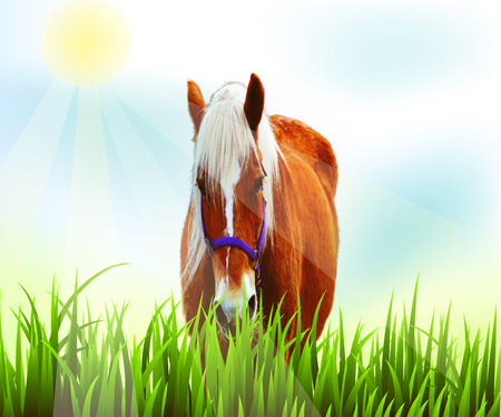bridle: Horse in pasture field with sunny blue sky Illustration