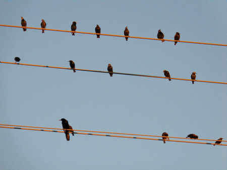 clique: Birds On a Wire Cable