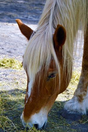 Horse in pasture farm photo