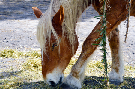 Horse in pasture farm picture photo