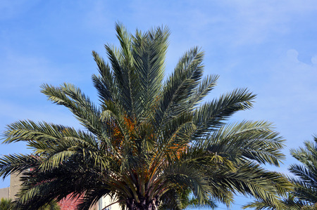 barrier free: Palm tree with blue vivid sky web background Stock Photo