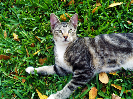 Cat playing on the grass close up photo
