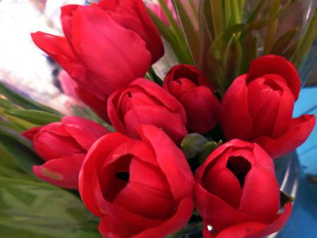 Tulip flowers wallpaper background photo