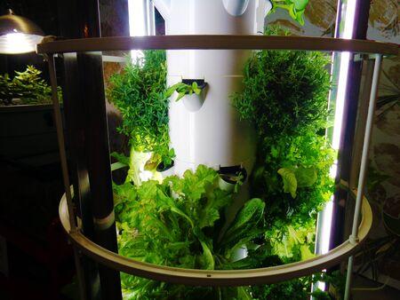 Hydroponic vegetables indoors