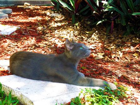 Beautiful cat picture photo