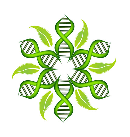 dna strands: DNA Strands with leafs on circle vector icon