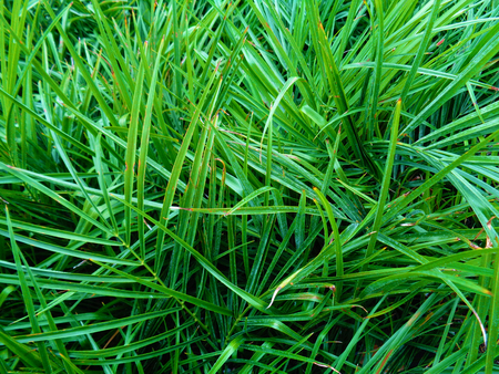 stock photograph: Grass photo background Stock Photo