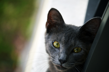 green eyes: Cat with beautiful green eyes