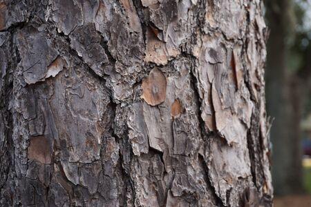 Hout boom natuurlijke textuur achtergrondafbeelding Stockfoto