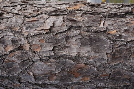 stock photograph: Wood natural texture
