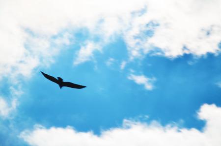 high spirits: Eagle flying on cloudy blue vivid sky Stock Photo