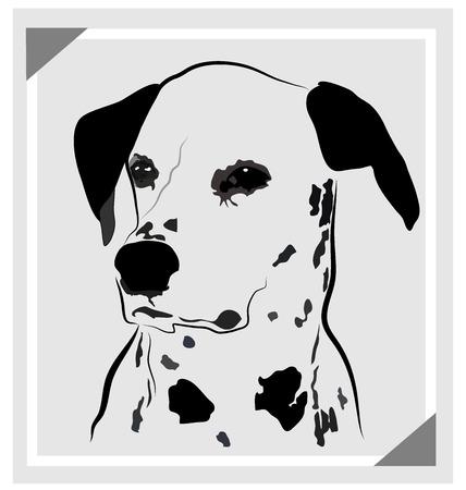 stock photographs: Dog dalmatian portrait vector image