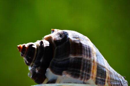 Seashell on green background Stock fotó