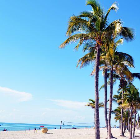 palmeras: Playa y árboles. Hollywood playa de Florida