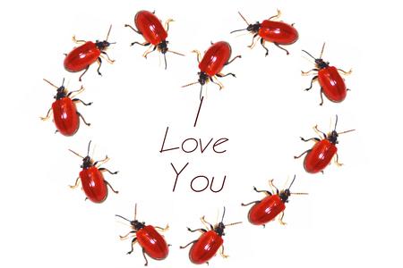 Heart Love with ladybugs. Valentines symbol Stock Photo